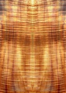 Flamed Koa (Acacia koa)